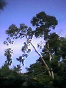 植物園、木と空