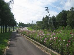 natuyasumi (2)