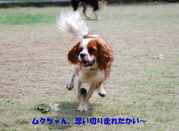 走れ走れ・・・