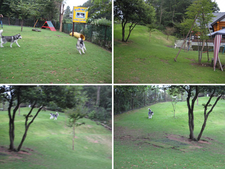 dogyard1.jpg