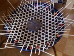 50cm皿1
