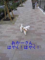 IMG_1515.jpg