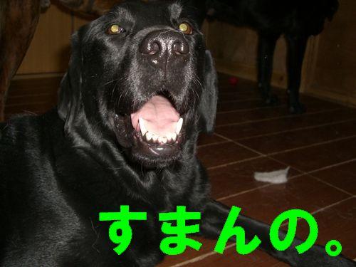 hyugo