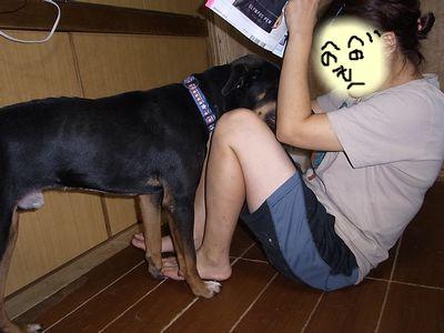 snap_huzoroi06_2009859551.jpg
