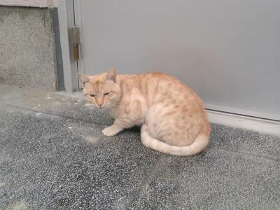 catSBSH0009_convert_20080215005510.jpg