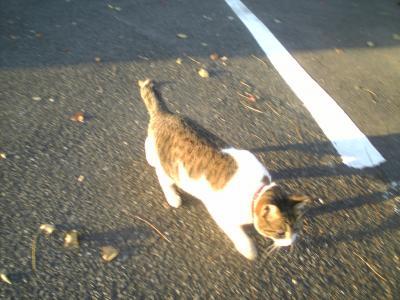 catSBSH0024_convert_20080215010215.jpg