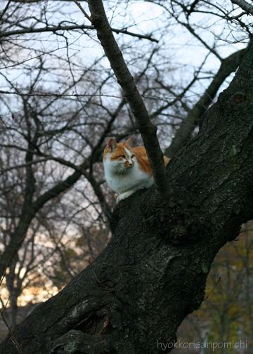 樹の上から①