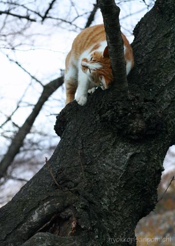 樹の上から②