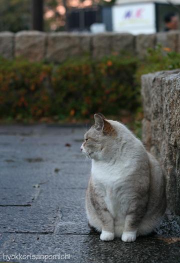 初猫写2009①