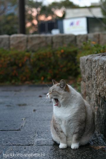 初猫写2009②