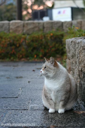 初猫写2009④