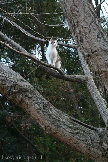 久々に樹の上で。