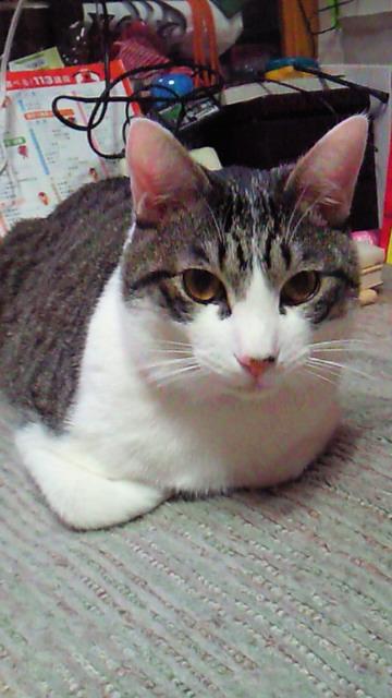 kotaroukotarou