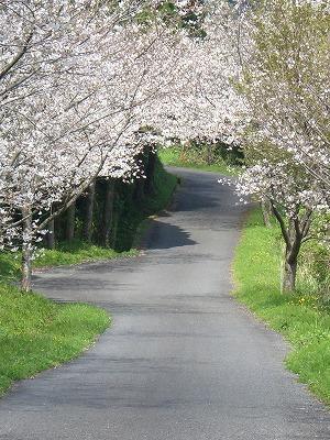 鷲尾岳さくらの小道