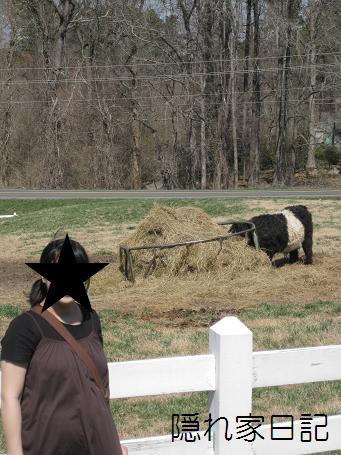 食事中の牛と