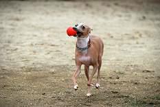 ボール遊び4
