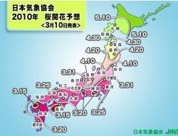 2010sakurayosou.jpg
