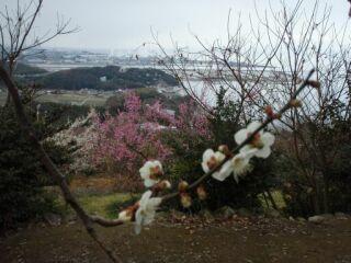 綾部山梅林20110303