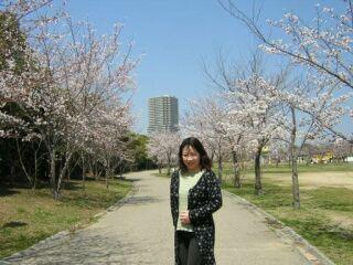 西神中央公園桜祭り直美