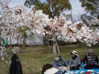 20100406高塚公園花見直美