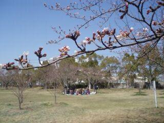 20110405高塚公園花見遠望