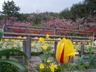 加西フラワーセンター花