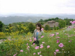高原のコスモス畑直美