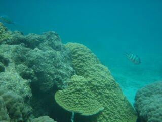 20110622スモールガーデンサンゴ