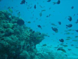 20110721熱帯魚の群れ