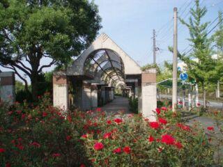 高塚公園バラ20110816