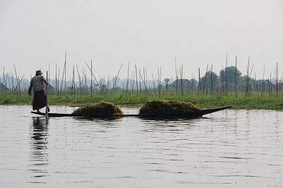 水草採集と浮畑