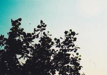 100609 (19)