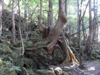 nagano2_wood.jpg