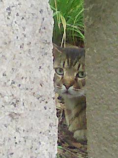 境内にいた野良猫