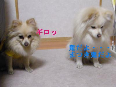 DSCF2741_convert_20090407224624.jpg