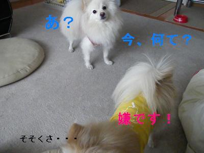 DSCF2795_convert_20090407225007.jpg