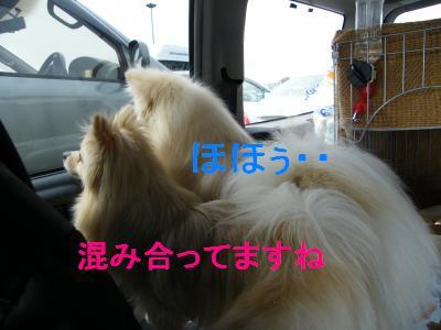 DSCF3842_convert_20090506175125.jpg