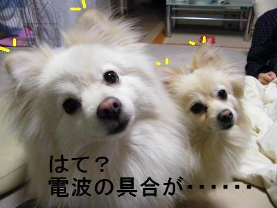DSCF4004_convert_20090512180129.jpg