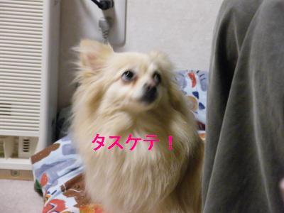 DSCF4012_convert_20090512180054.jpg