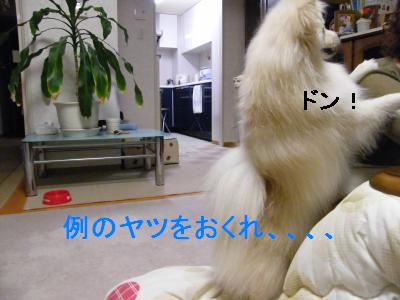 DSCF4177_convert_20090519173107.jpg
