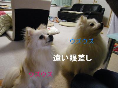 DSCF4184_convert_20090519173312.jpg