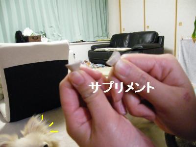 DSCF4186_convert_20090519173138.jpg
