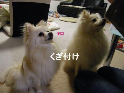 DSCF4187_convert_20090519173209.jpg
