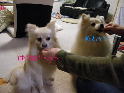 DSCF4188_convert_20090519173239.jpg