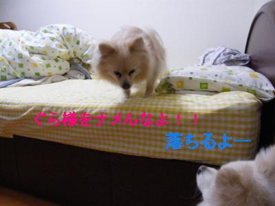 DSCF4213_convert_20090524172507.jpg