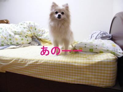 DSCF4214_convert_20090524172535.jpg