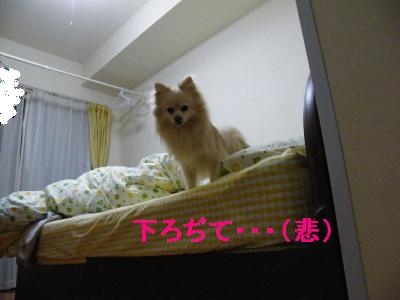 DSCF4215_convert_20090524172604.jpg