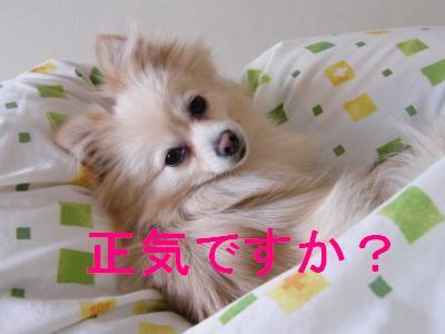 DSCF4464_convert_20090529160237.jpg