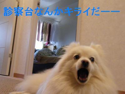 DSCF4473_convert_20090529160207.jpg