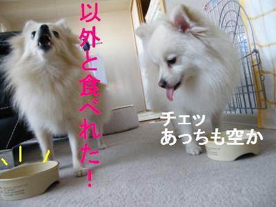 DSCF5751_convert_20090731213125.jpg